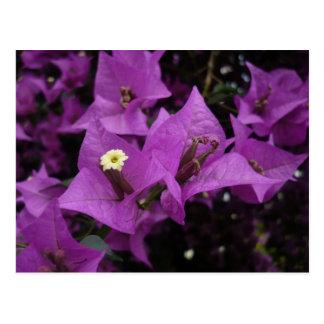 La púrpura florece la postal del |