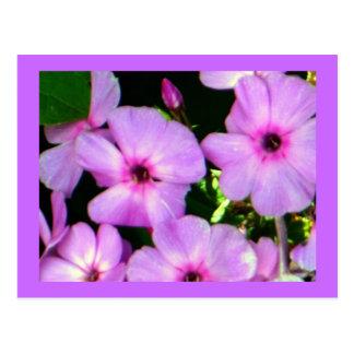 La púrpura impresionante florece las postales