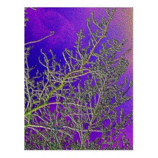 La púrpura santa con plata raya V3 Postales