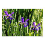 La púrpura triple irisa arte de la foto fotografía