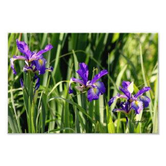 La púrpura triple irisa arte de la foto