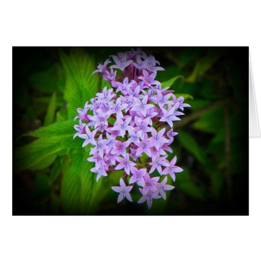 La púrpura tropical florece la tarjeta de felicita