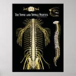 La quiropráctica de la espina dorsal y de los nerv impresiones