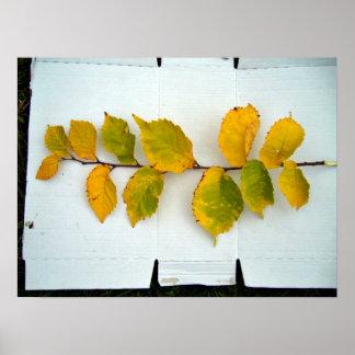 La rama del amarillo se va con las diversas sombra impresiones