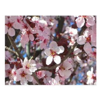 La rama del rosa florece postal