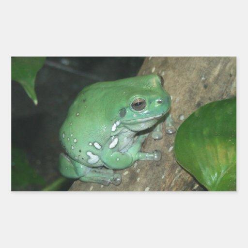 La rana arbórea del blanco, rana regordeta etiquetas