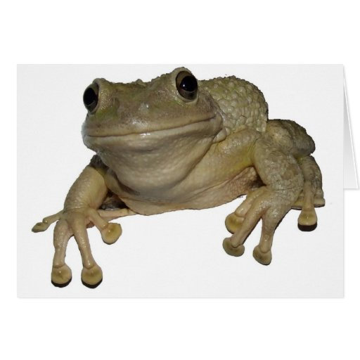 La rana de Alma Felicitaciones