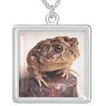 La rana del sapo en la mano martilló la foto de co joyerías