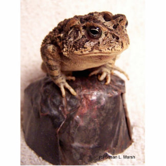 La rana del sapo en la mano martilló la foto de co escultura fotográfica