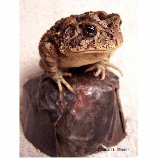 La rana del sapo en la mano martilló la foto de co escultura fotografica