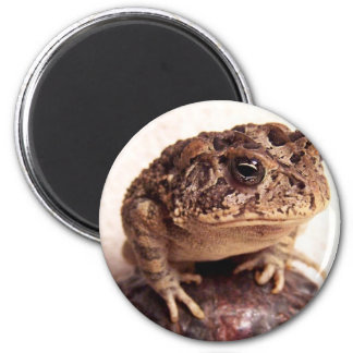 La rana del sapo en la mano martilló la foto de co iman