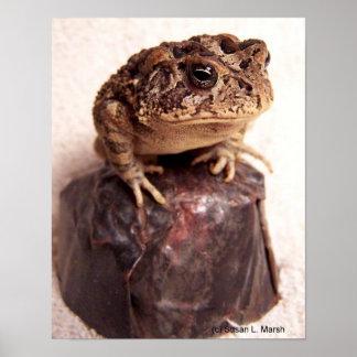 La rana del sapo en la mano martilló la foto de co posters
