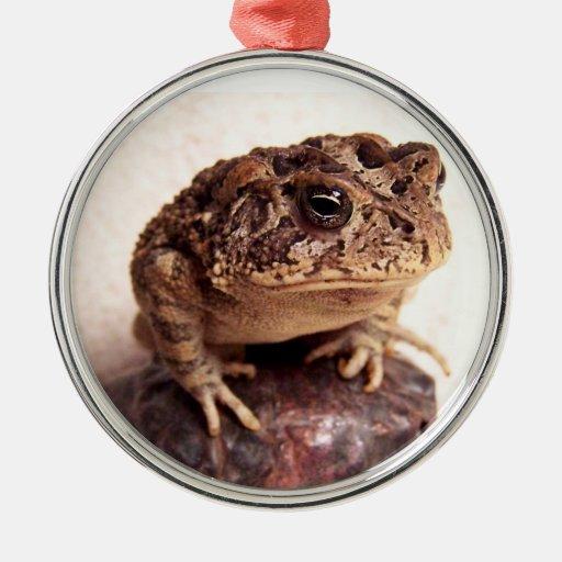 La rana del sapo en la mano martilló la foto de adorno