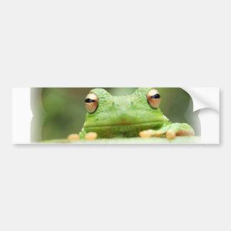 La rana observa a la pegatina para el parachoques pegatina de parachoque