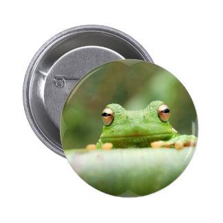 La rana observa el botón pin redondo de 2 pulgadas