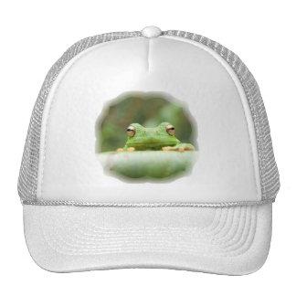 La rana observa el gorra de béisbol