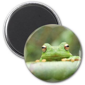La rana observa el imán