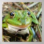 La rana observa el poster