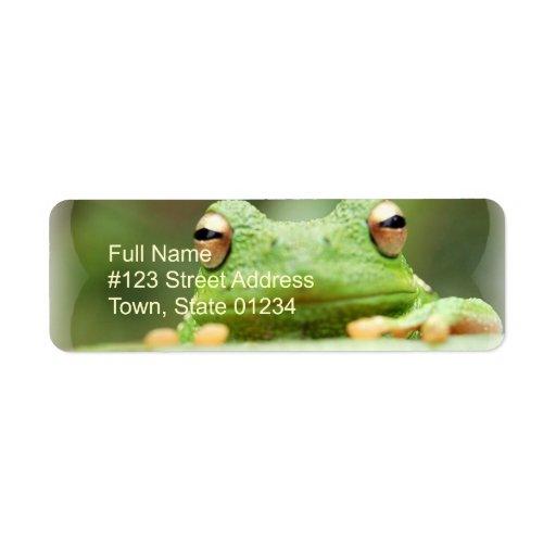 La rana observa la etiqueta del remite etiqueta de remite