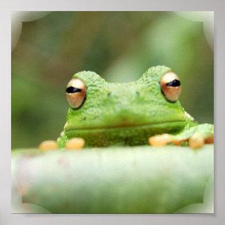 La rana observa la impresión del poster