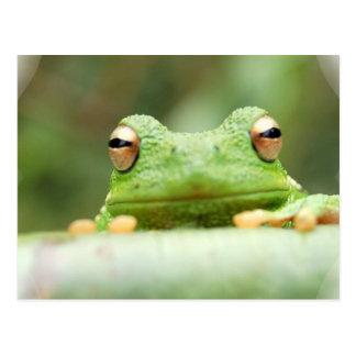 La rana observa la postal