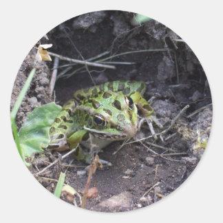 La rana que mira a escondidas de él es agujero pegatina redonda