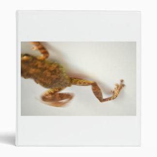 la rana que salta hacia el anfibio del animal del
