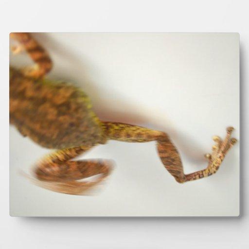 la rana que salta hacia el anfibio del animal del placas de plastico