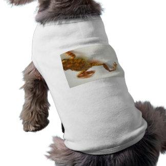 la rana que salta hacia el anfibio del animal del ropa de perros