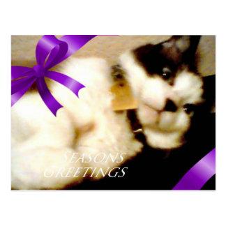 la raqueta sazona el gatito de los saludos postal