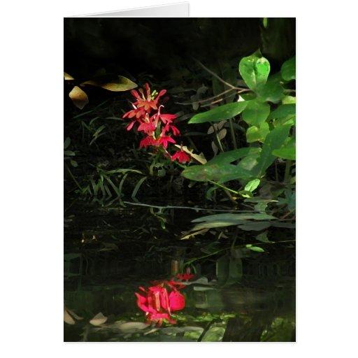 La reflexión de la flor cardinal le agradece carda felicitacion
