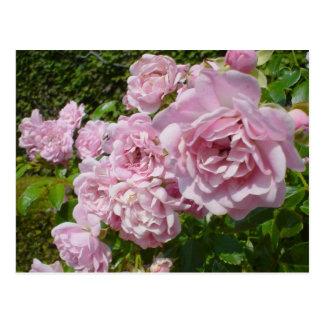 La reina de los rosas de Suecia Postal