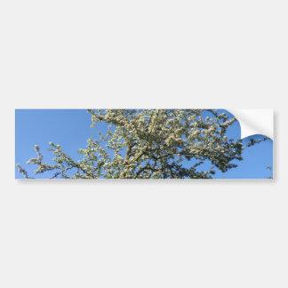 La reina de mayo pone sus floraciones pegatina para auto
