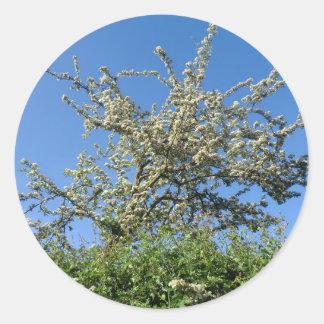 La reina de mayo pone sus floraciones pegatina redonda