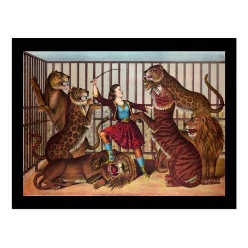 La reina del león tarjeta postal