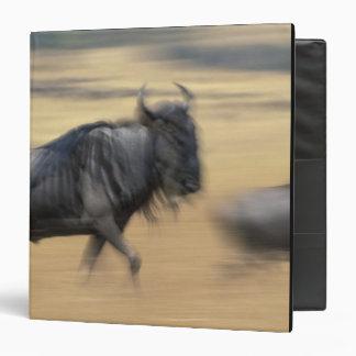 "La reserva del juego de Kenia, Mara del Masai, Carpeta 1 1/2"""