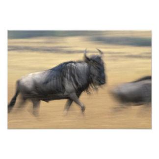 La reserva del juego de Kenia, Mara del Masai, emp Cojinete