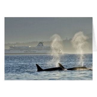 La respiración de las ballenas de la orca tarjeta de felicitación