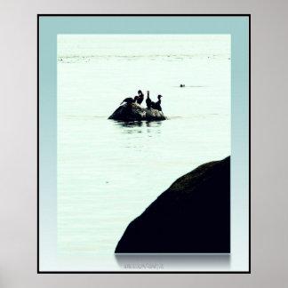 la roca y los cormoranes impresiones