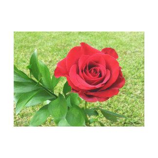 la rosa soltera impresion de lienzo