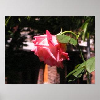 La rosaleda de Lucy Póster