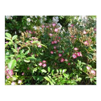 La rosaleda salvaje tarjetas postales
