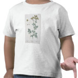 """La ruda, platea 7 """"de un herbario curioso"""", camisetas"""