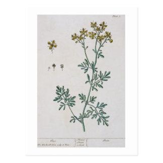 """La ruda, platea 7 """"de un herbario curioso"""", postal"""