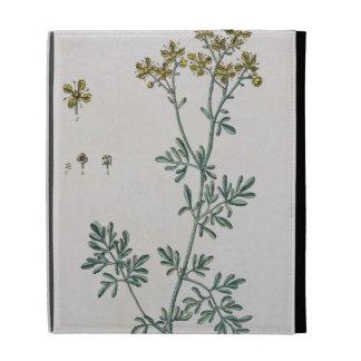 """La ruda, platea 7 """"de un herbario curioso"""", public"""