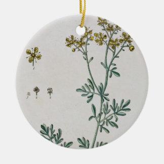 """La ruda, platea 7 """"de un herbario curioso"""", public ornamentos de reyes magos"""