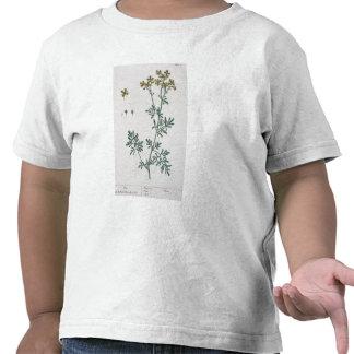 """La ruda, platea 7 """"de un herbario curioso"""", public camisetas"""