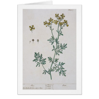 """La ruda, platea 7 """"de un herbario curioso"""", public tarjeta de felicitación"""