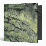 """La sabana, Georgia, árbol de Live Oak cubrió con Carpeta 1 1/2"""""""
