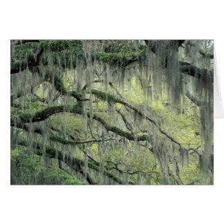 La sabana Georgia árbol de Live Oak cubrió con Tarjeta